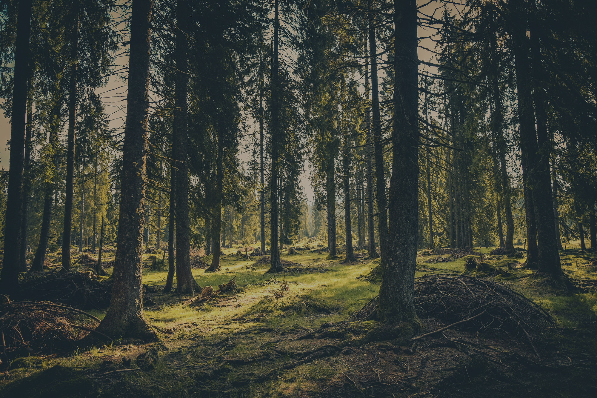 Tree Care in Wiltshire, Berkshire, Hampshire